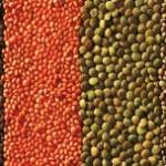Reginelle con lenticchie