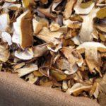 Polpette con funghi al sugo